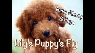 Heidi, Cherry, Vaya & Lily's Puppy's Fly - Children's Bedtime Story/Meditation