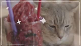 ร้าน Caturday Cafe คาเฟ่แมว สุดน่ารัก