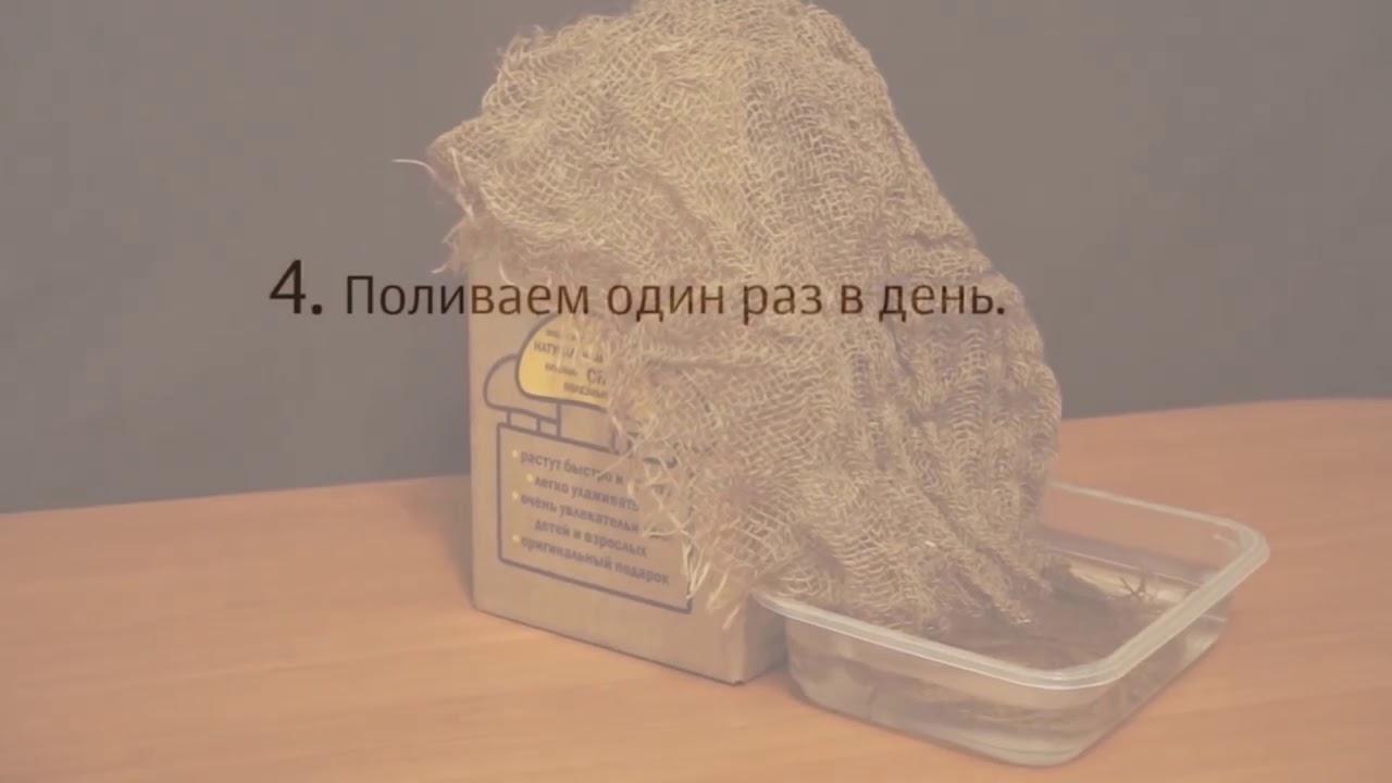 Видео Домашняя грибница