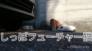 mqdefault - ドラマ「僕とシッポと神楽坂」手作りCM