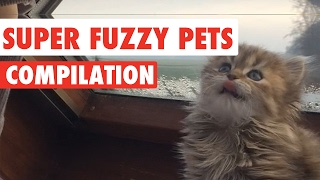 Super Fuzzy Pets Video Compilation 2017