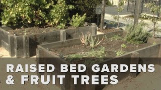 Raised Bed Gardens & Fruit Trees
