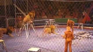 львы напали на дрессировщика