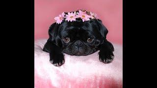Смешные собачки | Подборка видео приколов с милыми собаками и щенками