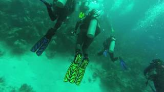 SCUBA DIVING IN BAHAMAS -- WALL DIVE -- STUART'S COVE // FULL DIVE