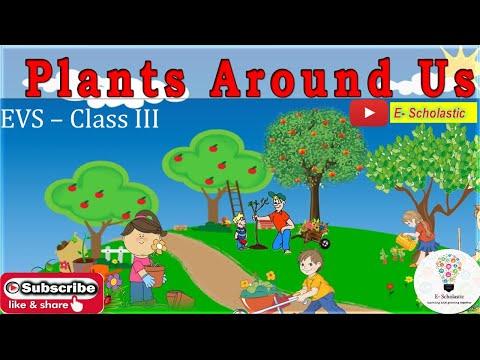 Class-3_EVS_Plants Around Us