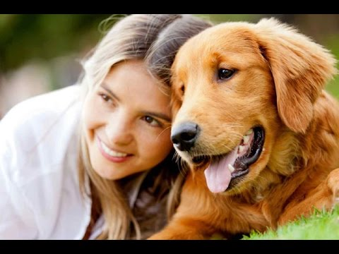 Video Symptoms of Lyme Disease in Dogs