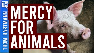 Why Are Farm Animals Being Slaughtered? (w/ Leah Garces)