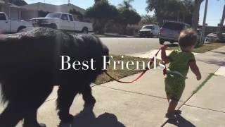 faze tari cei mai buni prieteni
