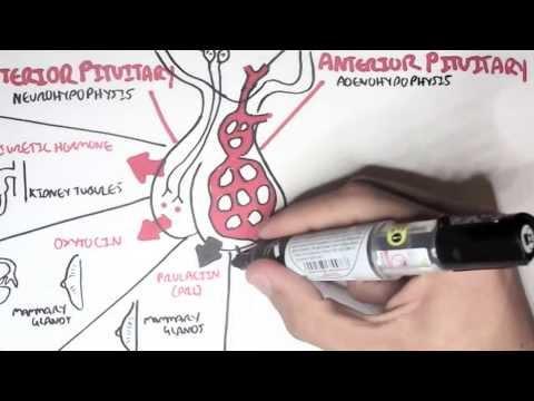 Endokrynologia - przegląd