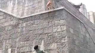 Паркур собаки