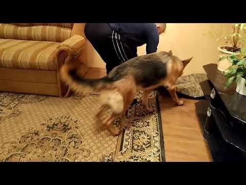 Собаку выгоняют из дома.