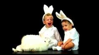 Conejo -Super Bebé Animales