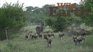 WildEarth - Sunset Safari - 19 March 2020