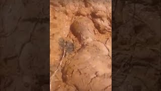 MDS!! Corpo Encontrado Após Rompimento Da Barragem Em Brumadinho