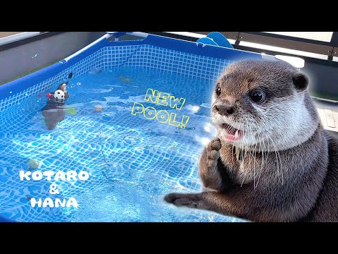 Two Otters Having a Pool Party!