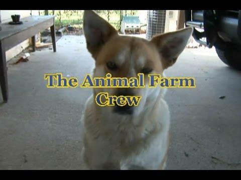 """EDU & The Animal Farm Crew: """"Continuum-D"""""""