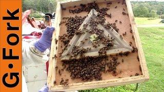 Harvest Honey With Bee Escape - Beekeeping 101 - GardenFork