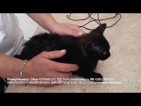 Выпадение прямой кишки у котенка help animal shelter