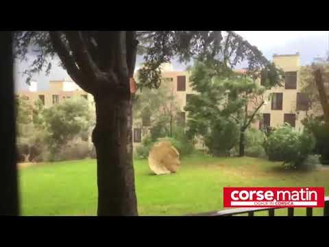 VIDÉO. Météo : la région bastiaise touchée par une mini-tornade