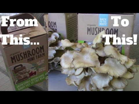 Grow Oyster Mushrooms At Home! Dr Sebi Approved download