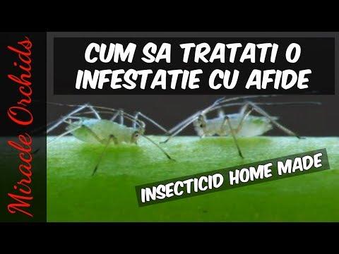 Cactusi, tratamente si informatii, daunatorii si bolile ce afecteaza planta, insecticide, erbicide