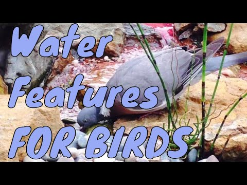 Water Features for birds | bird friendly water features