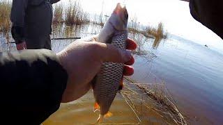 Рыбалка в поселке ладожское озеро