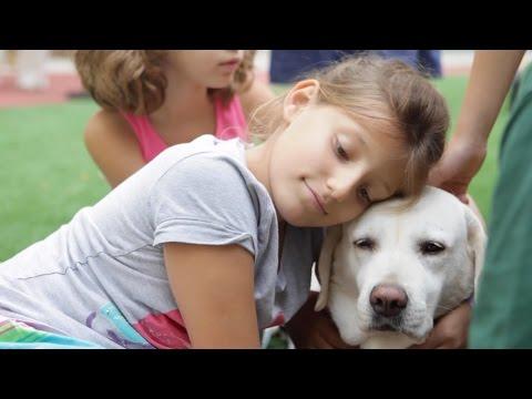 Imagen del vídeo Niños y mascotas en las escuelas