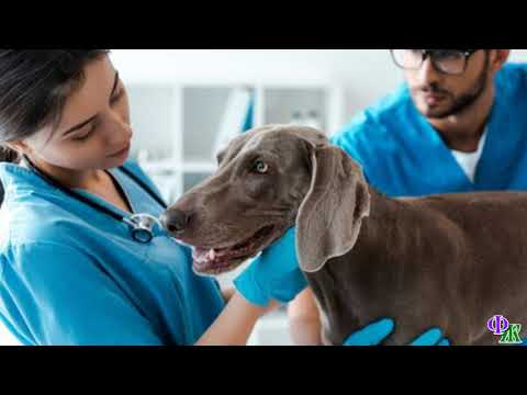 «Хвосты удачи» 2 Ветеринар смог вылечить хромающую собаку благодаря своей интуиции