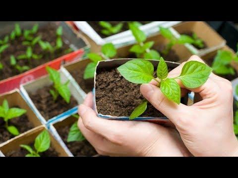 Выращивание комнатных цветов, зелени, овощей на продажу / Бизнес идея