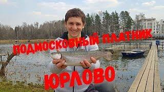Платная рыбалка в литвиново форум последняя страница