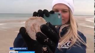 Берег Балтийского моря оказался заполнен вмерзшими в песок медузами