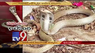 Holy Snake kills devotee! - TV9