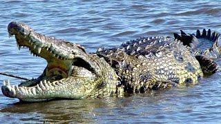 Animales Salvajes en el Río Mara - Serpientes y Reptiles HD