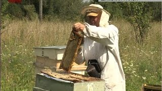 Департамент сельского хозяйства начал прием заявок на конкурс «Лучший пчеловод»
