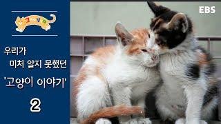 고양이를 부탁해 - 고양이 이야기_#002