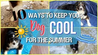 10 Ways To Keep Your Dog Cool For The Summer