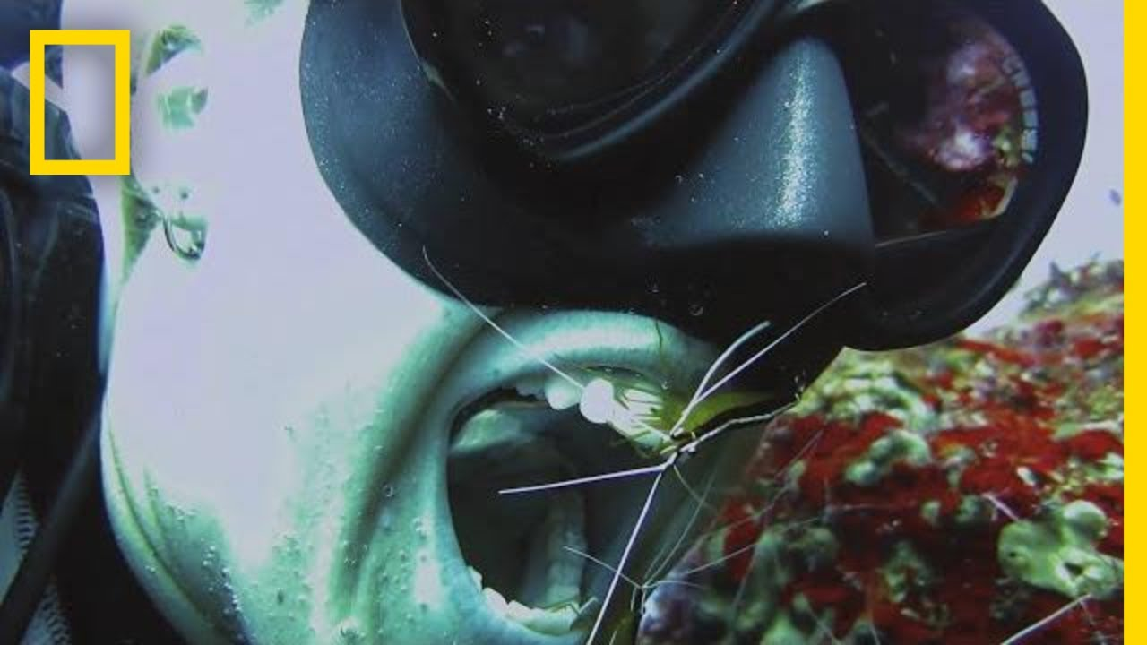 Should You Let Shrimp Clean Your Teeth? | National Geographic thumbnail