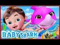 🔴 Baby Shark , Baby Shark Doo Doo Doo Doo , Wheels on the Bus ,Happy Birthday Song - Banana Cartoon