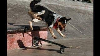 Jumpy Extreme skateboarder dog