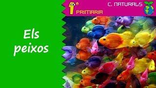Ciències de la Naturalesa. 1r Primaria. Tema 5: Els peixos