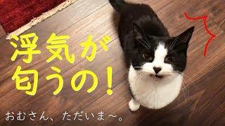 猫まみれで浮気してきたら、家の猫にバレました【保護猫サロンohana】 | Kholo.pk