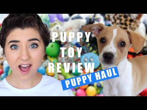 PUPPY TOY HAUL 🐶 Dog Reacts To Toys/Bed/Clothes