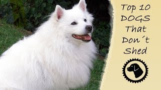 HATE SHEDDING? Here are the Top 10 Dogs that DON'T Shed!