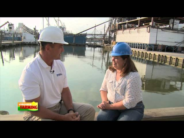 Virginia Farming: Menhaden Fish Industry.