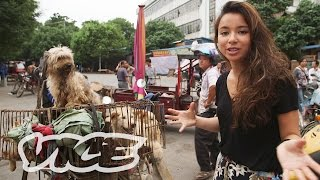 Dining on Dogs in Yulin: VICE Reports (Full Length)