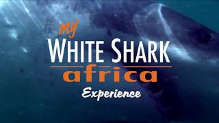 Up close & personal with great white sharks in Mossel Bay, South Africa