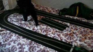 Cat chasing slotcar