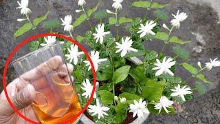 ऐसा करने से मोगरा/Jasmine पर आऐंगे इतने फ़ूल कि सारा मोहल्ला महक उठेगा